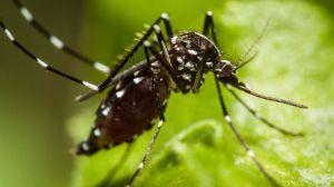 La Concejalía de Sanidad intensifica las acciones para combatir al mosquito tigre