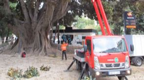 Los parques y jardines de Valencia inicia actuaciones de inspección y poda