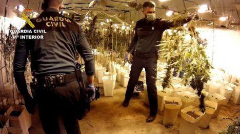 Desarticulada en Valencia una organización criminal y desmantelado un cultivo de 12.000 plantas de marihuana