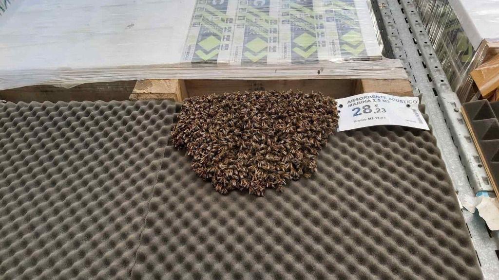 Evacúan una tienda en Alicante a cuenta de un enjambre con más de 3.000 abejas