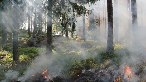 1.300 desempleados comenzarán a trabajar para prevenir incendios en los montes de la Comunitat